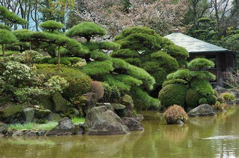 japanese topiary trees japanese topiary topiary also known as bonsai