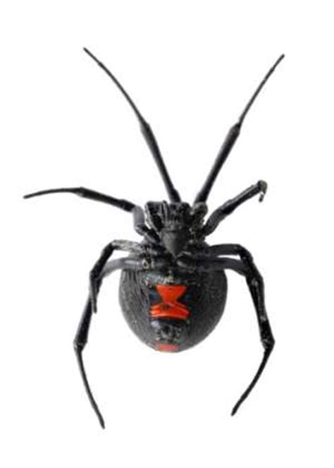 common  spider bites colonial pest control