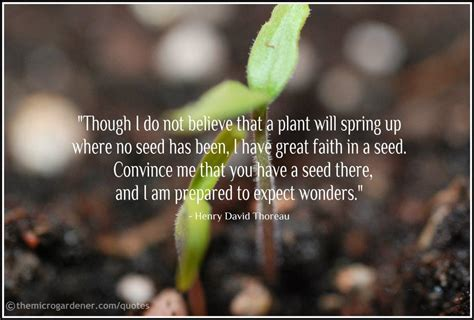 seed starting guide quick tips for starting seeds successfully the micro gardener