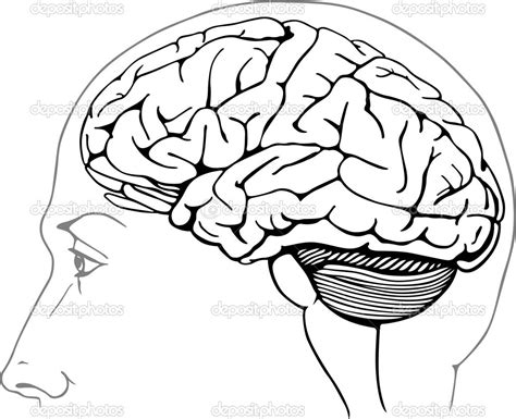 coloring page brain coloring brain coloring page coloring page of the brain