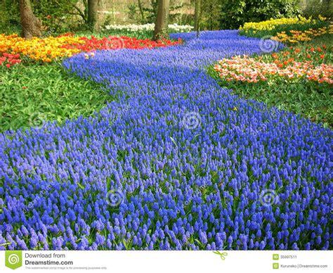 Blue Flower Garden Blue Flowers Stock Image Image 35997511