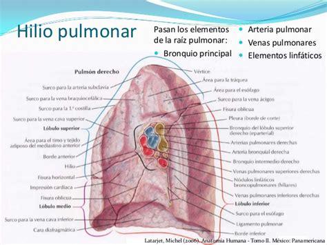 anatomia de latarjet ruiz 4 edicion pdf descargar libros anatomia humana latarjet 4 edicion tomo ii barcelona
