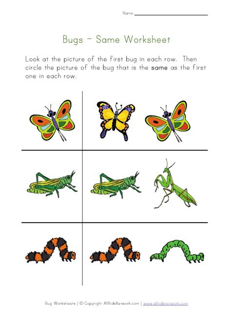 kids bug and insects worksheets pictures of insects for kids hairstyle