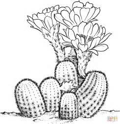 cactus coloring page lobivia famatimensis cactus coloring coloring