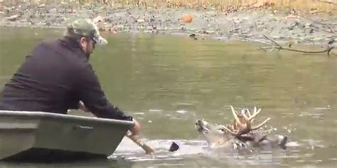 rescues deer drowning deer rescued by vet in most dramatic wildlife you ll today