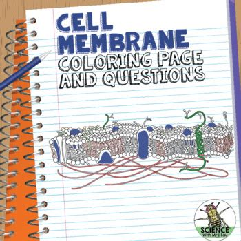 cell membrane coloring activity  students identify