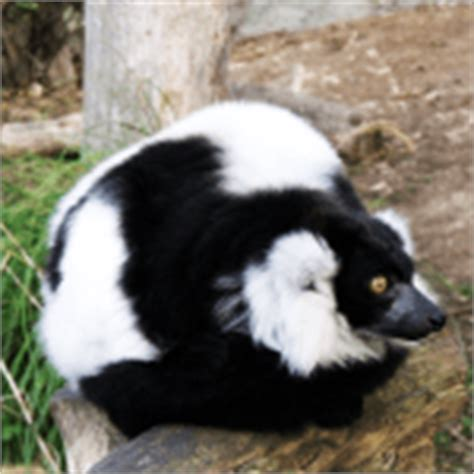 how to get skunk smell how to get rid of gasoline smell how to get rid of stuff