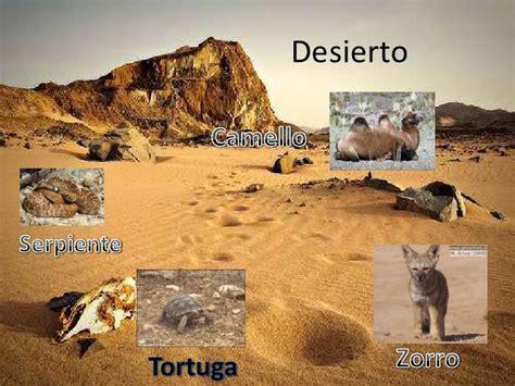 imagenes de animales y plantas del desierto animales terrestres