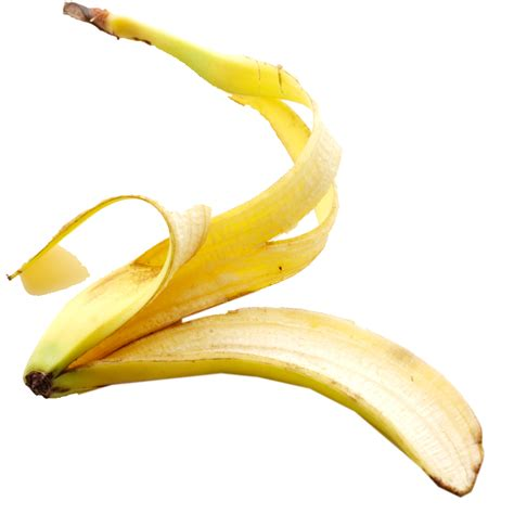 can dogs eat banana peels banana peel png www pixshark images galleries with a bite