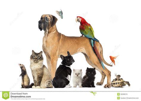Cat Dreams Of Fish Birds Milk Pet Pet Pet Product by Gruppo Di Animali Domestici Gatto Uccello