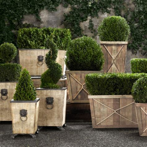 live boxwood topiaries so that s cool