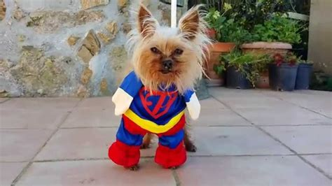 puppies in costumes best dogs in costume compilation beds and costumes