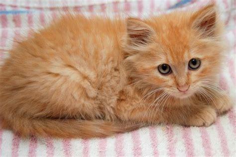 cafechoo image orange cat names