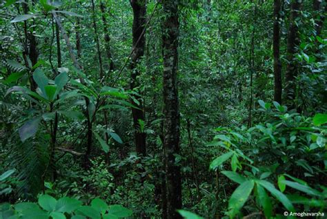 plants found in tropical evergreen forest western ghats a biodiversity hotspot jlr explore