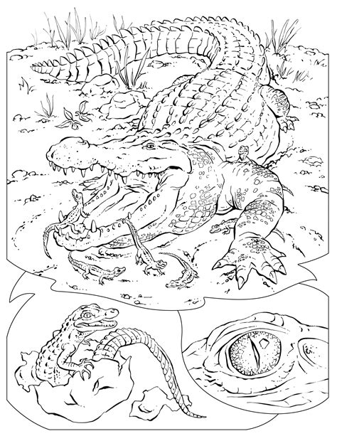 wildlife coloring pages coloring pages wildlife research conservation