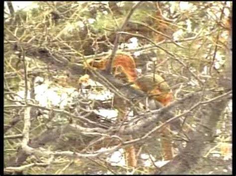 Squirrel Launcher Bird Feeder squirrel launcher