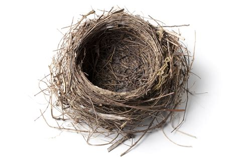 photo of a reinforcing an empty nest health wellness colorado