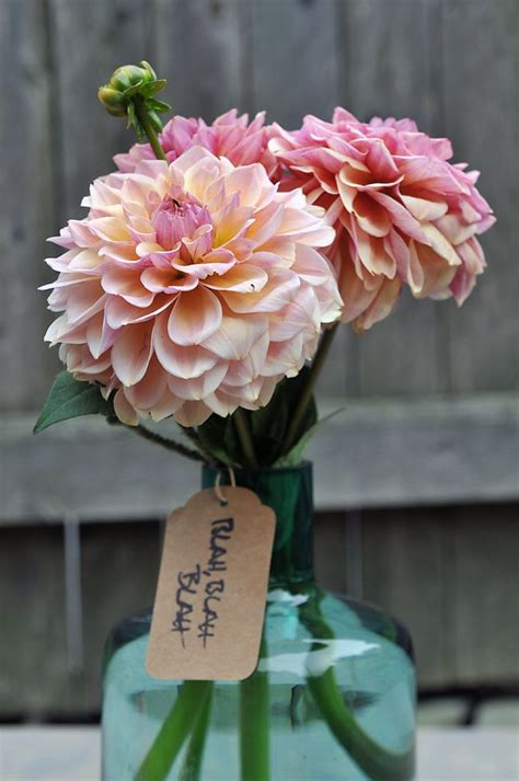 403 best images about dahlia on pinterest white dahlia bouquet garden roses and dahlia bouquet