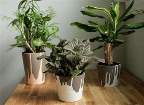 House Plant Pots Paint Dipped Pots Make Colorful Containers For Your House