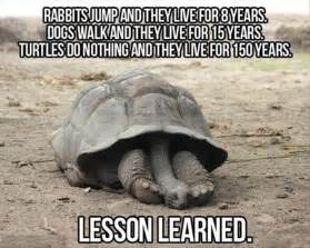 Life Lesson Memes - funny animals are even funnier with these captions 30 pics