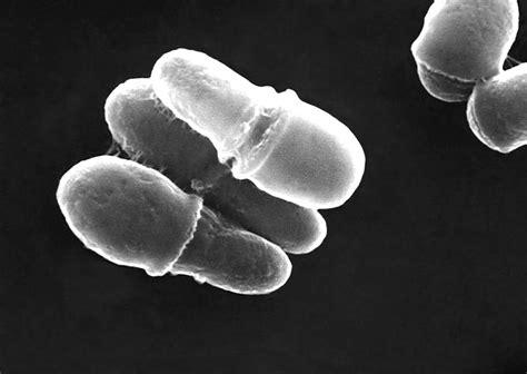 dermatite seborroica alimentazione il lievito della forfora malassezia alimentazione e
