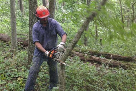 cut   small tree    tips  beginners