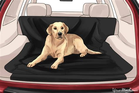 how to get dog smell out of your house remove dog smell from car carpet carpet nrtradiant