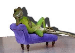 Couch Sofa Covers Lounge Lizard