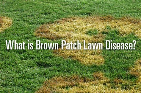 how to get rid of grass rust fungus what is brown patch lawn disease trugreen