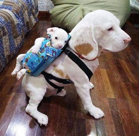 mother   puppy carrier realfunny