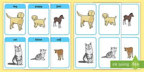animals   young matching picture cards