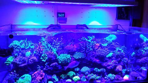 this tank is truly one beautiful aquarium led lighting orphek
