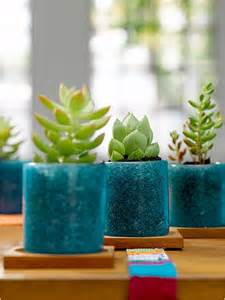 kitchen plants that don t need sunlight best indoor plants for your home best houseplants for home decor