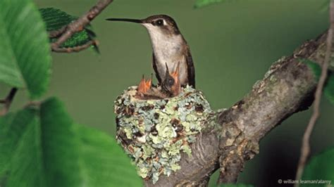 16 most astonishing birds nest built by birds