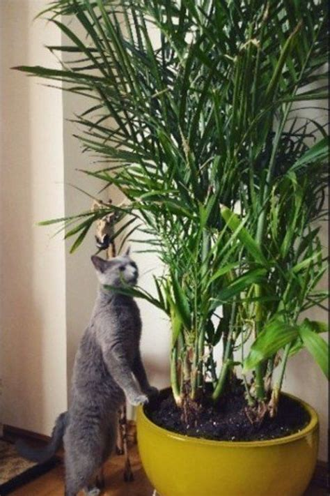 15 beautiful house plants that can actually purify your 15 beautiful house plants that can actually purify your