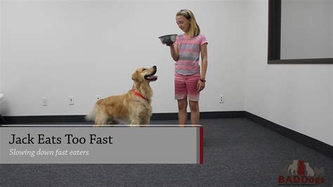 puppy eats fast does your eat fast