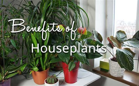benefits of houseplants the benefits of houseplants david domoney