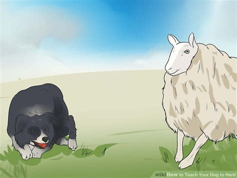 how to your to herd how to teach your to herd 11 steps with pictures wikihow