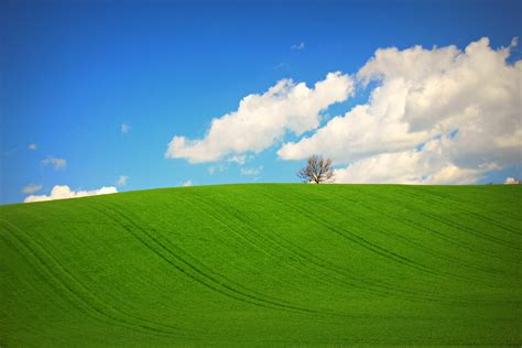 imagenes de paisajes verdes para pantalla hermosa pradera verde hd 3318x2212 imagenes wallpapers