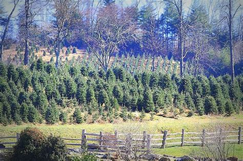 pin by north carolina mountains on christmas tree farms