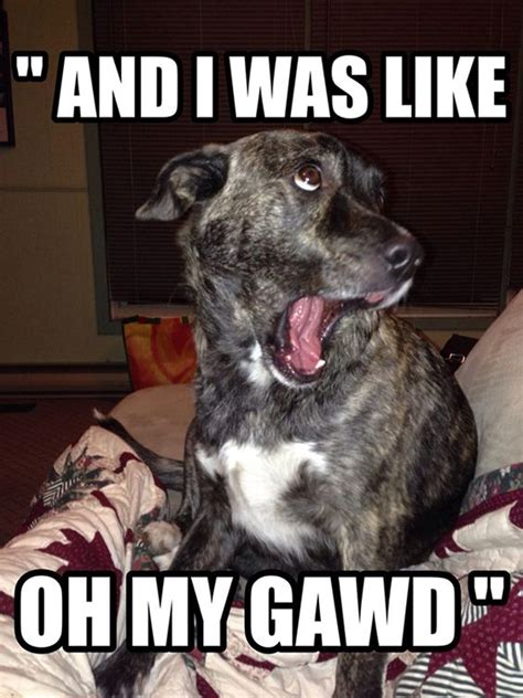 Hilarious Dog Memes - quot and i was like oh my gawd quot funny dog meme adorable