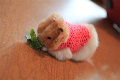 Hamster Sweater by The Sparkling Martins A Cuteness