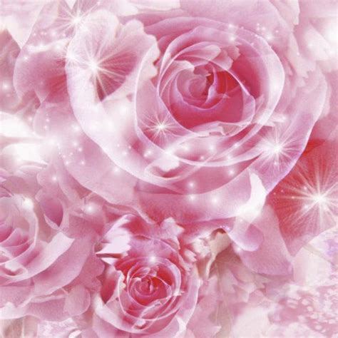 15 Benih Bunga Sweet William Mix cara menanam bunga sweet william tanamanbaru