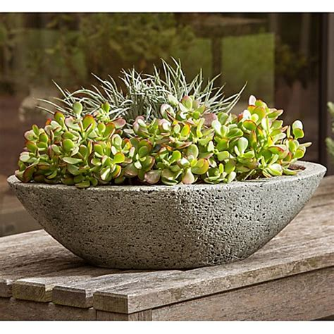 Bed Bath And Beyond Alpine by Cania Planter In Alpine Bed Bath Beyond