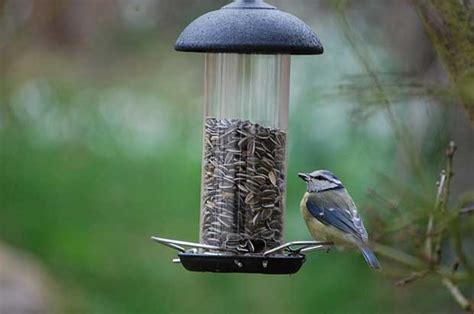Birds And Feeders Birds And New Feeders Bird
