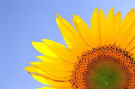 Free photo: Hilarity, Life, Summer, Sunshine   Free Image on Pixabay   1349125