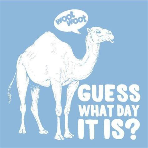 Happy Hump Day by Happy Hump Day The Notorious D O U G