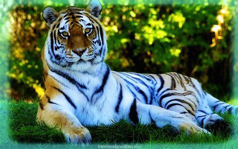 imagenes animales y naturaleza llamativos paisajes de la naturaleza con animales banco