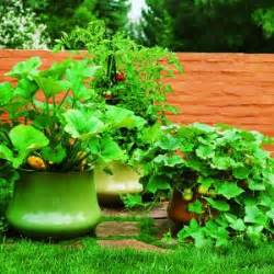 246 Best Florida Container Gardening And Other Interesting Container Vegetable Gardening Florida