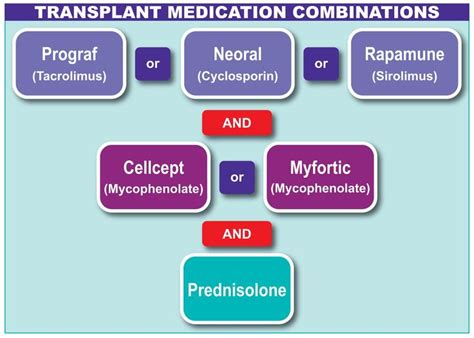 List Of Perscription Liver Detox Medication by List Of Drugs That Are Used In Liver Transplant Neoral